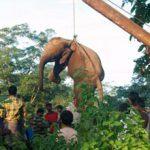В Индии семь слонов погибли под колесами товарного поезда