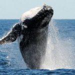 Организаторы игры Синий кит арестованы