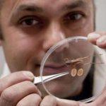 Как избавиться от насекомых в постели и как они выглядят?