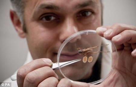 самые маленькие человеческие яйца фото крупным планом