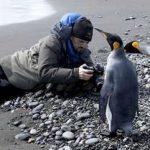 Марш пингвинов: четверть миллиона пингвинов на побережье Солсбери (фото)