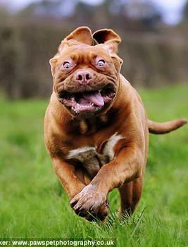 Фотография собаки