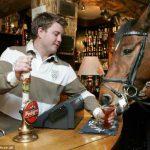Конь, который любит пропустить бокал пива в пабе