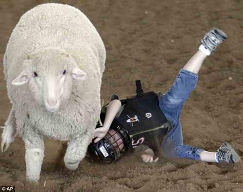 Мини-родео на овцах в исполнении детей: Это надо видеть!