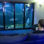 Самый большой домашний аквариум