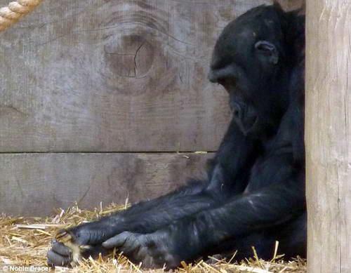 Италия запретила выступления животных в цирке