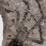 Обнаружены следы доисторического огромного паука