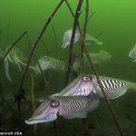 Удивительные фотографии победителей конкурса любителей подводных съемок