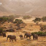 Невероятные фотографии Намибии — техника рисунка
