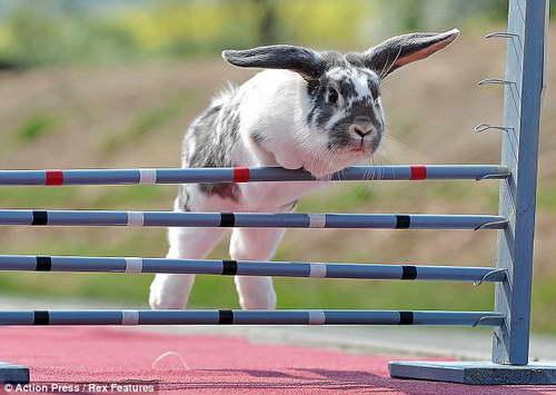 Кроличьи скачки