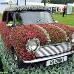 Популярный в 60-х автомобиль Mini стал хитом на шоу Tatton Flower