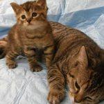 8 августа какой праздник: Всемирный день кошек