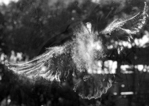 Отпечаток совы на окне
