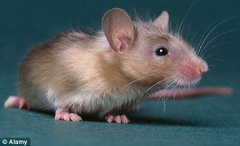 Устройство для слепых мышей