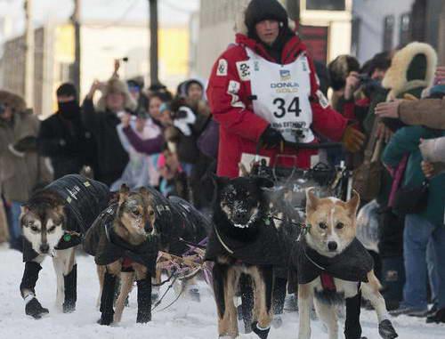 Победителем 40-х гонок Iditarod собачьих упряжек стал Даллас Сивей ...