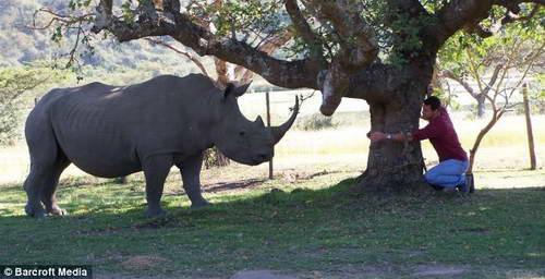 Фермер из ЮАР и носорог