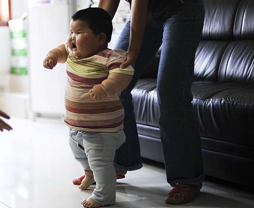 Китайская 1,5 годовалая Дан-Дан весит 20 кг