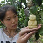 В Китае фермер выращивает груши в форме будды
