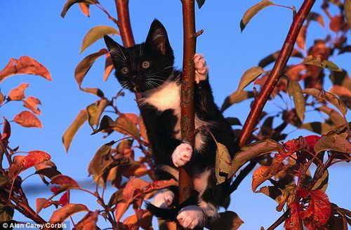 В США полицейский полез на дерево спасать котенка и застрял сам