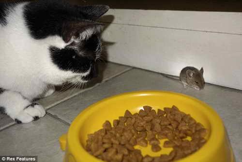 Застенчивый кот, который даже мышь не обидит