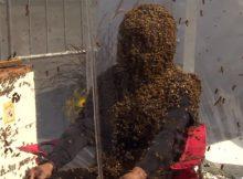Установлен новый мировой рекорд Гиннеса по ношению пчелиной бороды