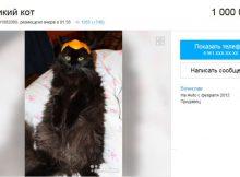 Купить кота за 1000000 на «Авито» Ростов-на-Дону