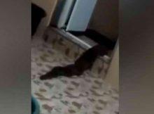 Неизвестное существо вылезло из туалета