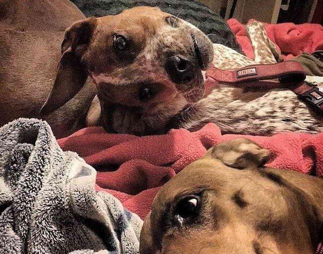 Оптическая иллюзия «Бедная собака»