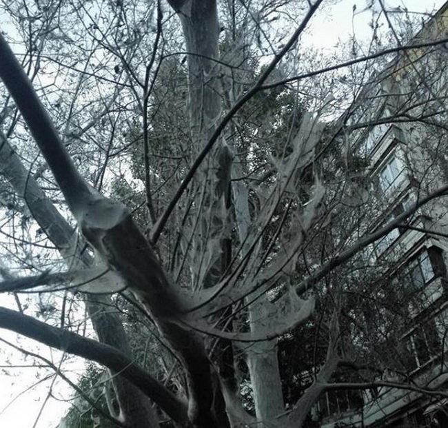 Гусеницы в Москве