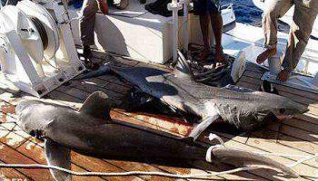 В Шарм Эль Шейхе акула смертельно ранила 70-летнюю немку