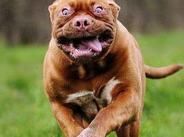 Фотографии с собаками от победителя международных конкурсов