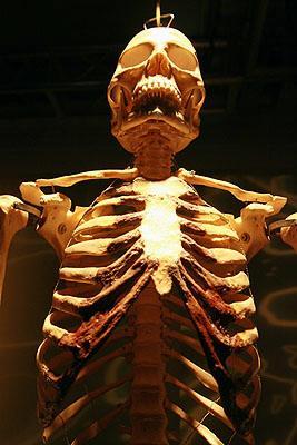 Выставка Bodies Revealed