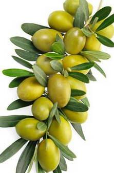 Оливки для сердца