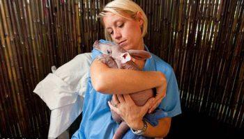 Впервые детеныш трубкозуба показан в зоопарке Флориды