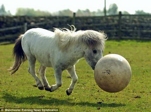 Пони футболист