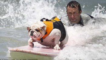Собаки серфингисты на 6-м чемпионате в США