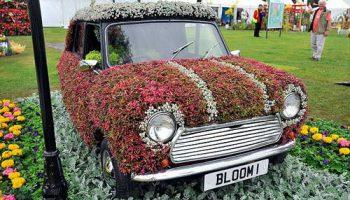 Популярный в 60-х автомобиль Mini стал хитом на шоу Tatton Flower