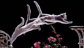 Поразительные стоп-кадры движений животных на одной фотографии