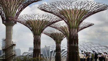 Супердеревья в Сингапуре сделаны из бетона и металла