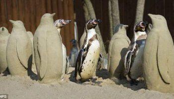 В морском парке для скрашивания одиночества пингвинов делают песчаные фигуры