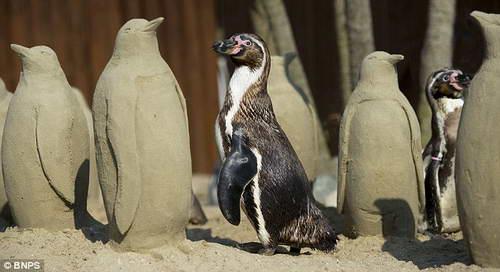 Пингвины и песчаные фигуры