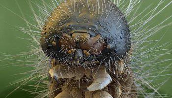 Фотографии креативных существ невидимых для глаза супермощным микроскопом