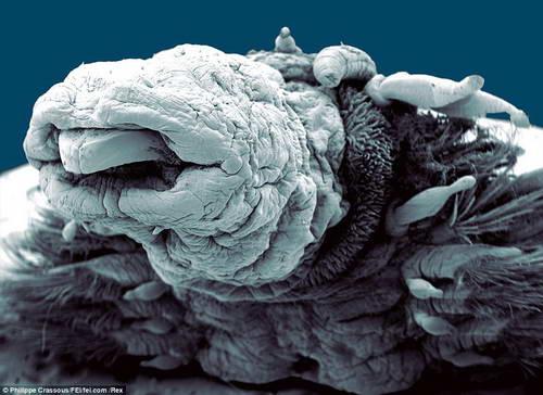 Фото супермощным микроскопом