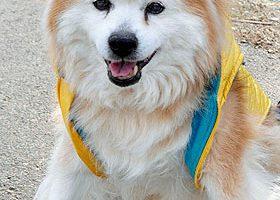 Умерла самая старая собака в мире. Ей было 26 лет и 9 месяцев или 186 лет по-нашему