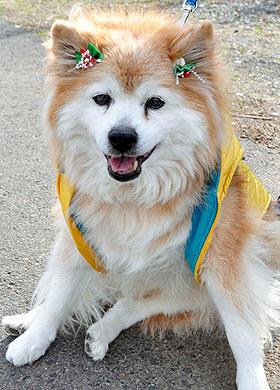 Самая старая собака -26 лет и 9 месяцев