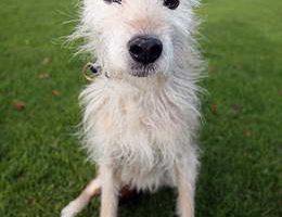 Самой старой собакой стала Пип, которой 24,5 года