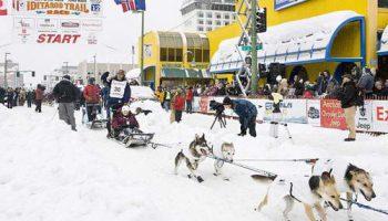Традиционные гонки собачьих упряжек на Аляске – 1600 километров