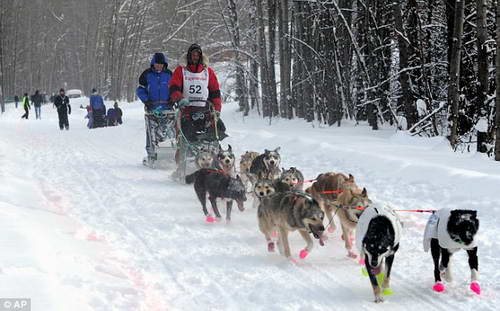Гонки собачьих упряжек на Аляске Айдитарод