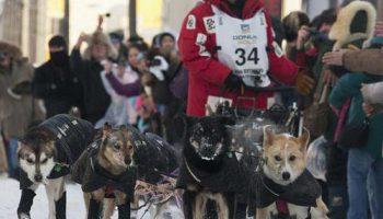 Победителем 40-х гонок Iditarod собачьих упряжек стал Даллас Сивей
