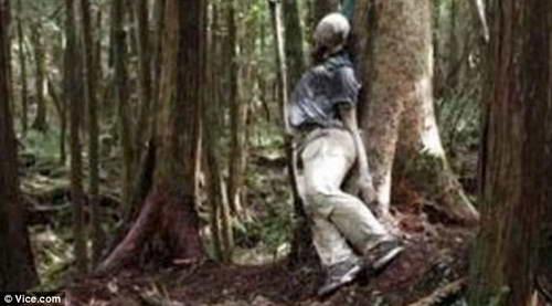 Самоубийца в лесу Фудзи